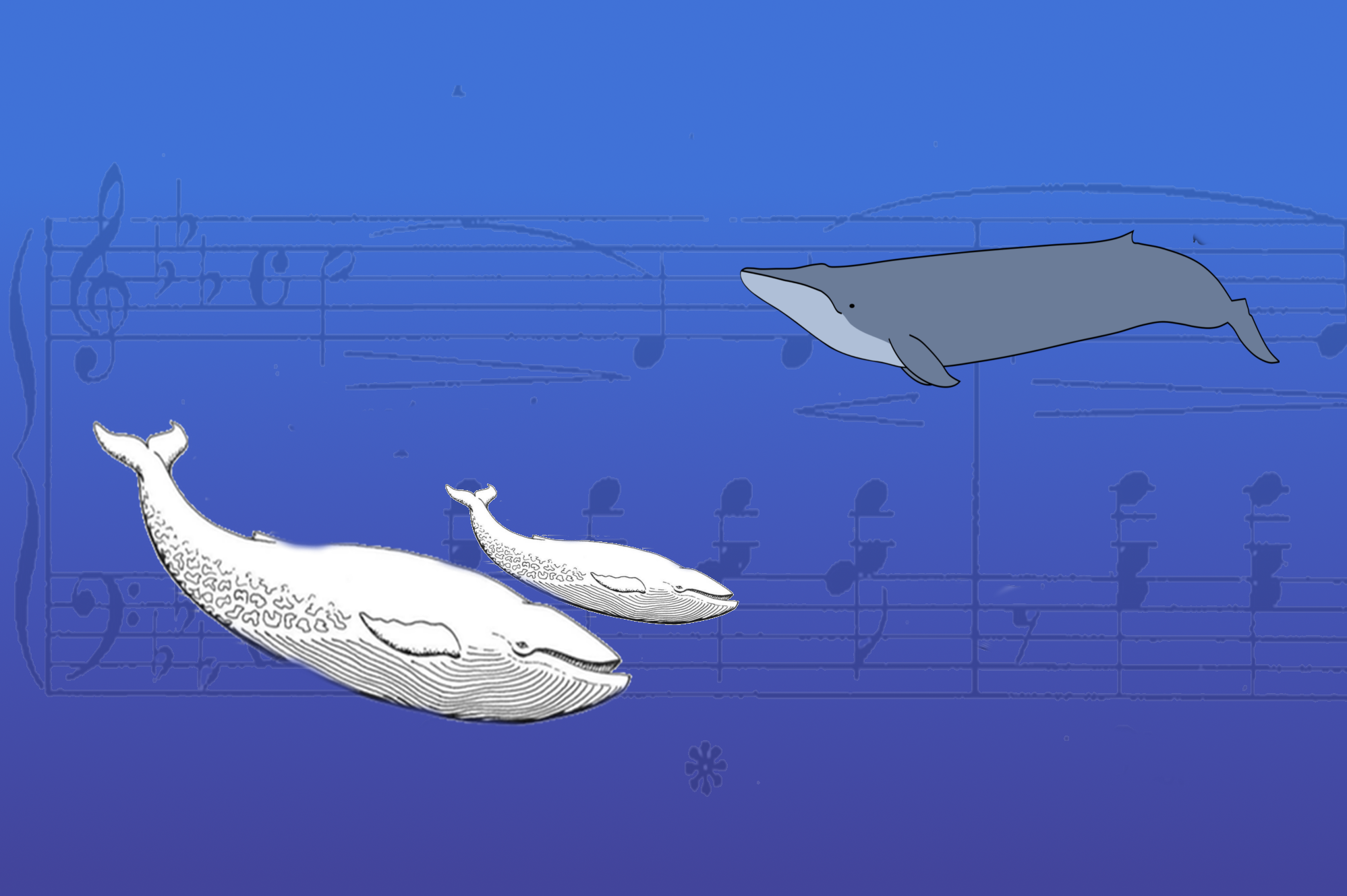 "The Quest To Seek Out 52 Hertz AKA ""World's Loneliest Whale"""
