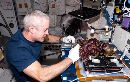 ISS Astronauts Enjoy First Space-Grown Salad