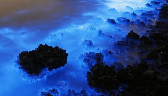 Why Hong Kong's Luminescent Blue Coastline Is A Cause For Concern